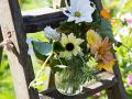 behind the back garden Step ladders flowers jug